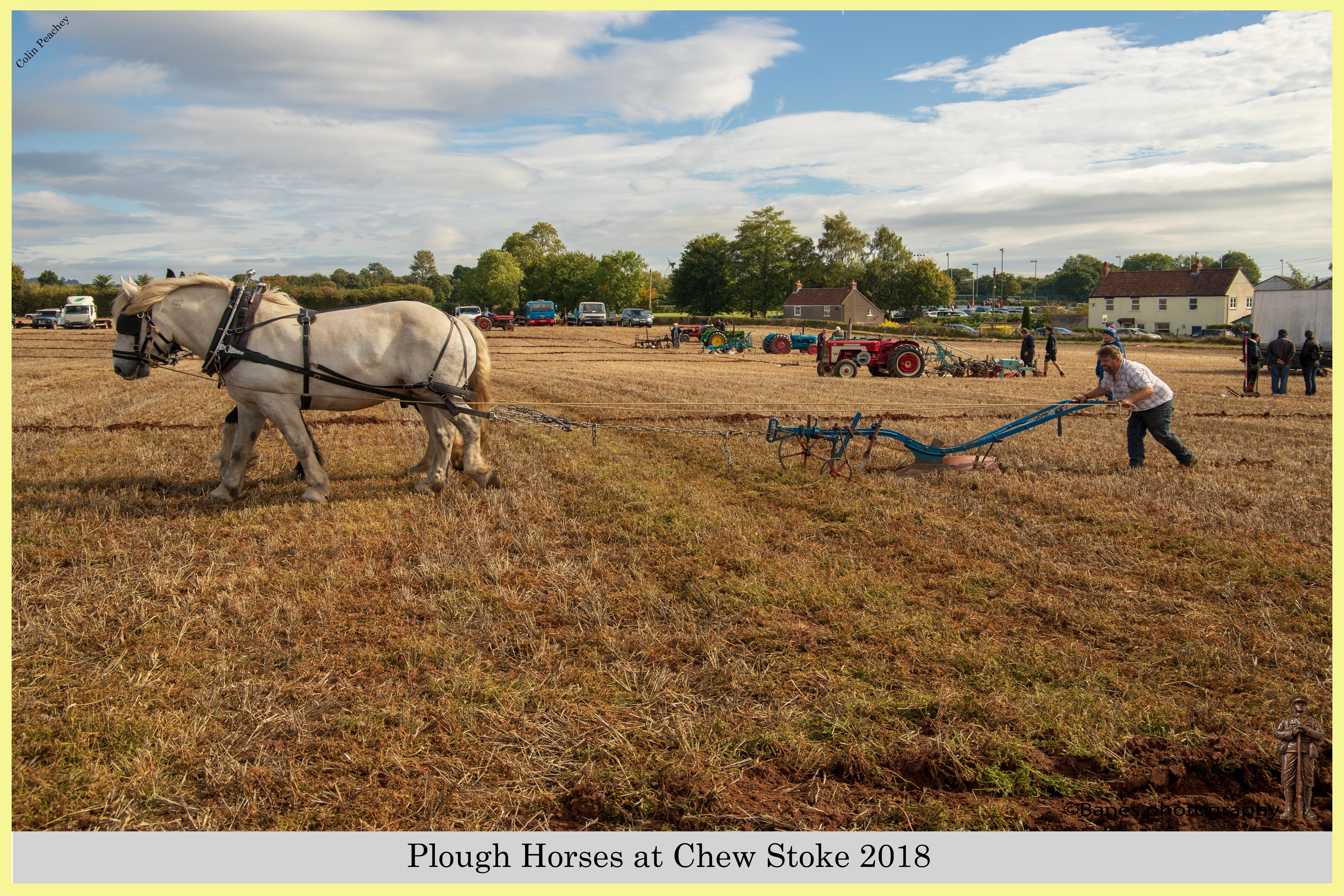 Plough Horses at Chew Stoke 2018